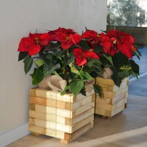Wooden Square Flowerpot